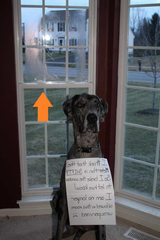 Dog Door For Great Dane