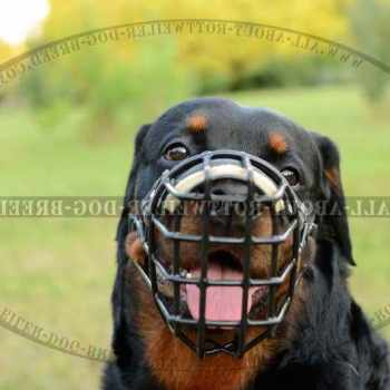 Dog Muzzle For Rottweiler