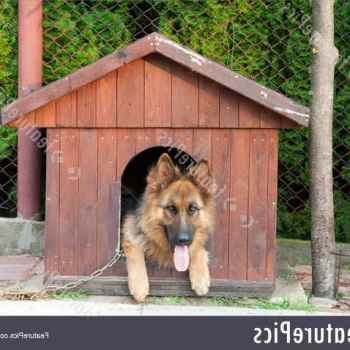Doghouse For German Shepherd Size