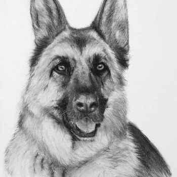Drawing Of German Shepherd