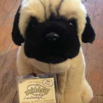 Ebay Pug Puppies For Sale
