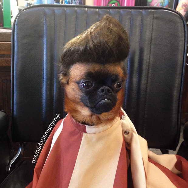 Elvis Pug