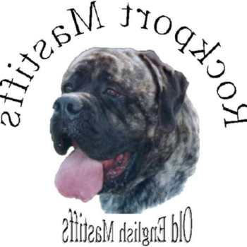 English Mastiff Breeders Near Me