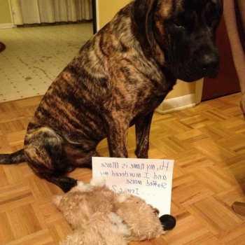 English Mastiff Stuffed Animal
