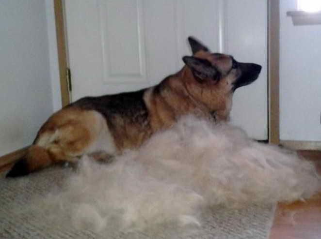 Furminator For German Shepherd