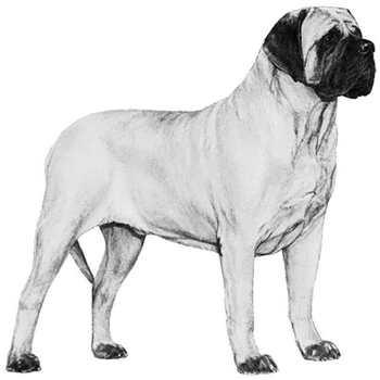 General Mastiff