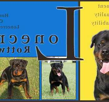 German Rottweiler Puppies For Sale In Houston Texas