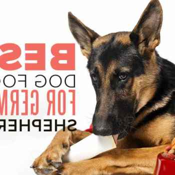 German Shepherd Best Food