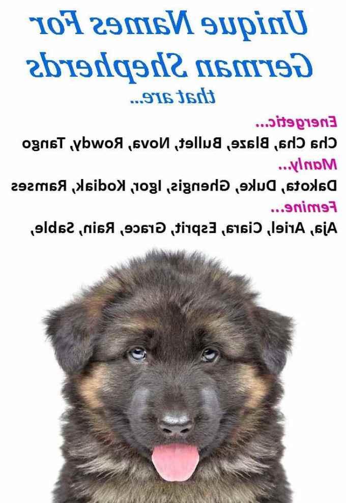 German Shepherd Boy Names And Meanings