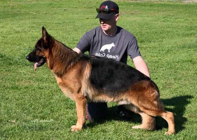 German Shepherd Breeders Southern California