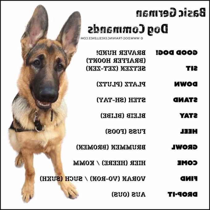 German Shepherd Dog Commands