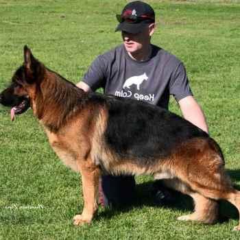 German Shepherd For Sale California