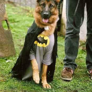 German Shepherd Halloween Costume