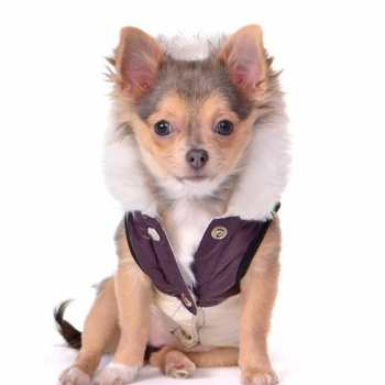 Dog Clothes For Chihuahua