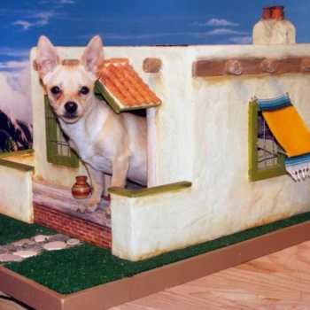 Dog House For Chihuahua
