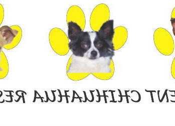 Enchantment Chihuahua Rescue Albuquerque