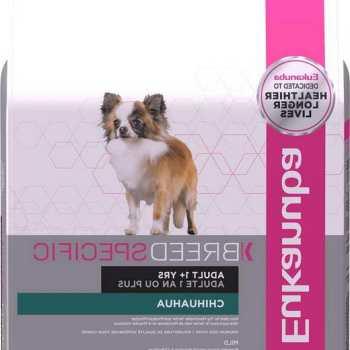 Eukanuba Chihuahua