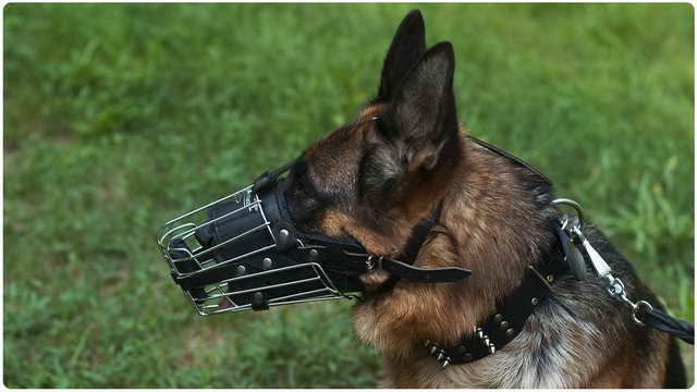 German Shepherd Muzzle
