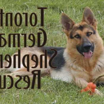 German Shepherd Pet Rescue