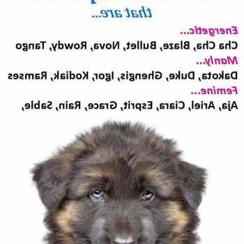 German Shepherd Puppy Names