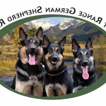 German Shepherd Rescue Denver