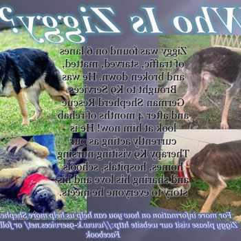 German Shepherd Rescue Pensacola