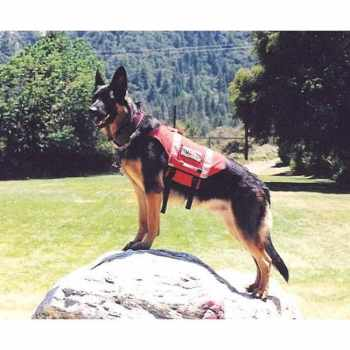 German Shepherd Service Dog Adoption