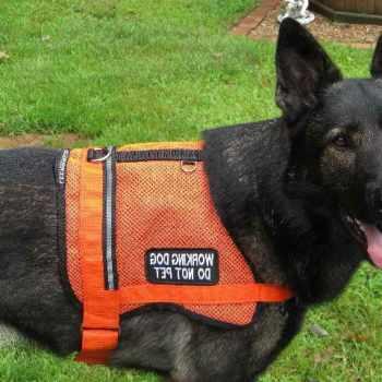 German Shepherd Service Dog Vest