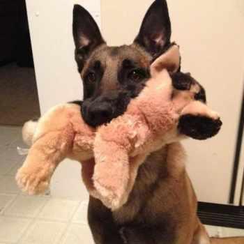 German Shepherd Stuffed Animal Build A Bear