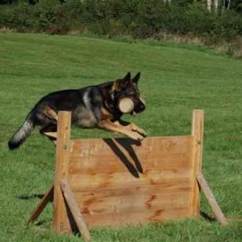 German Shepherd Training Equipment