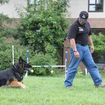 German Shepherd Training Seattle