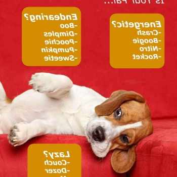 Girl Beagle Names