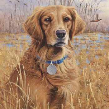 Golden Retriever Canvas Art