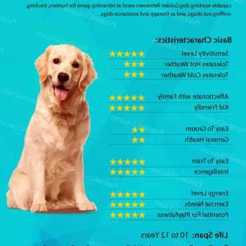 Golden Retriever Food Recommendations