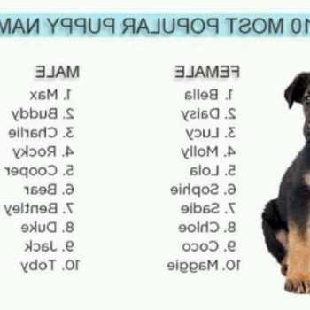 Good Husky Names Boy