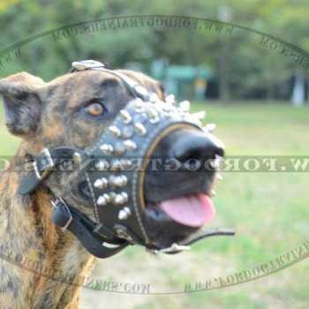 Great Dane Dog Collars