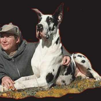 Great Dane Rescue Of El Paso