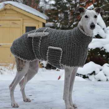 Greyhound Dog Clothing