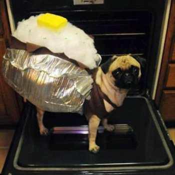 Halloween Costume For Pug