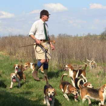 How To Train A Beagle To Hunt