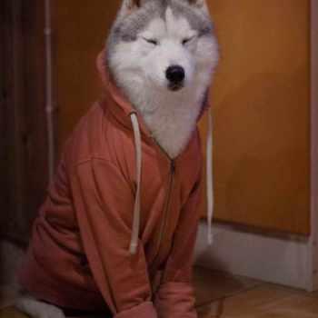 Husky Dog Clothes