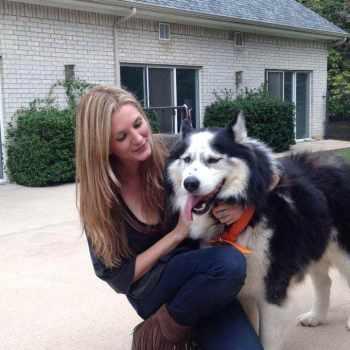 Husky Pet Adoption