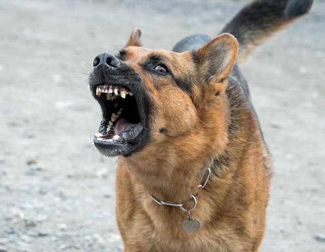 How To Get A German Shepherd To Stop Barking