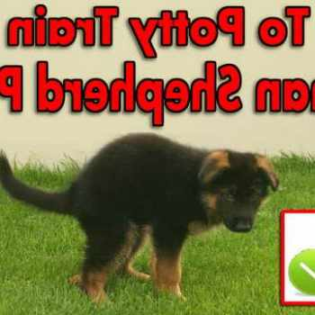 How To Train A Puppy German Shepherd