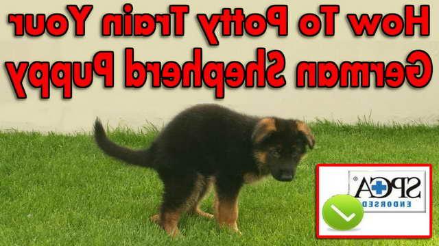 How To Train Your German Shepherd Puppy