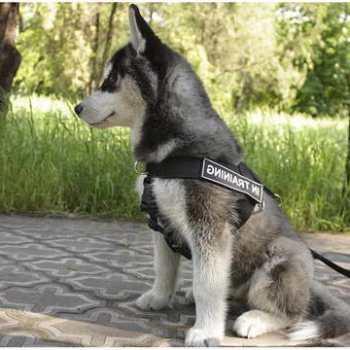 Husky Walking Harness
