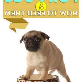 How Much Should I Feed My Pug