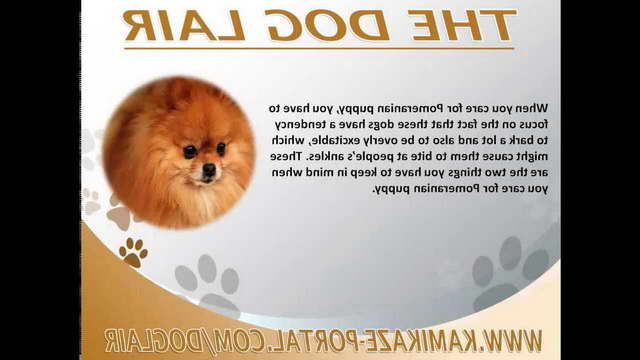 How To Take Care Of A Pomeranian