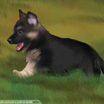I Want To Buy A German Shepherd Puppy