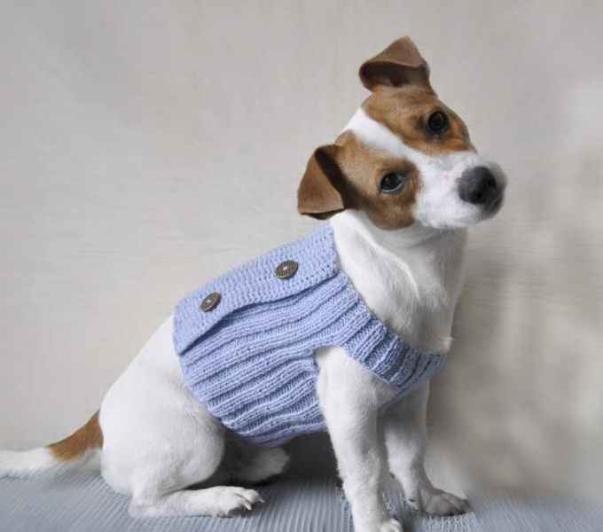 Jack Russell Dog Clothing
